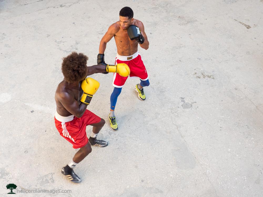 Boxers in Havana
